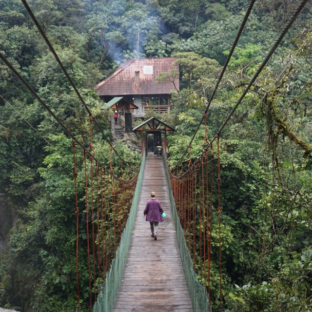 jungle walkway ecuador