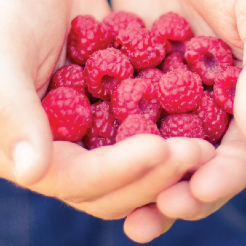 Is the fruit in crowdfunding research